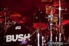 Evanescence_bush_10