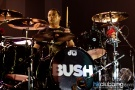 Evanescence_bush_14